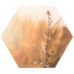 l-Gras-hexagon.jpg