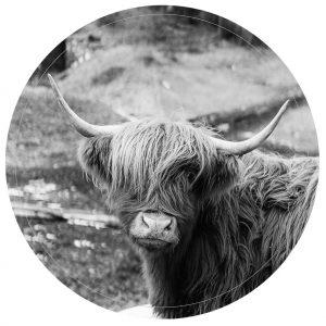 lag-res-zwart-highlander-30cm-1.jpg