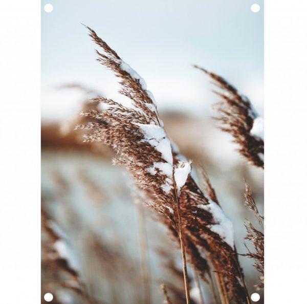 lr-tuinposter-winter.jpg