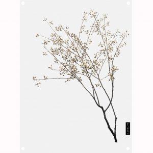 dry-plants-tuinposter1.jpg