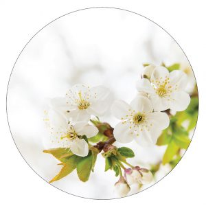 muurcirkel-blossom-wit-30cm-copy.jpg