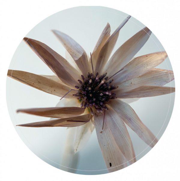 witte-bloem-40cm.jpg
