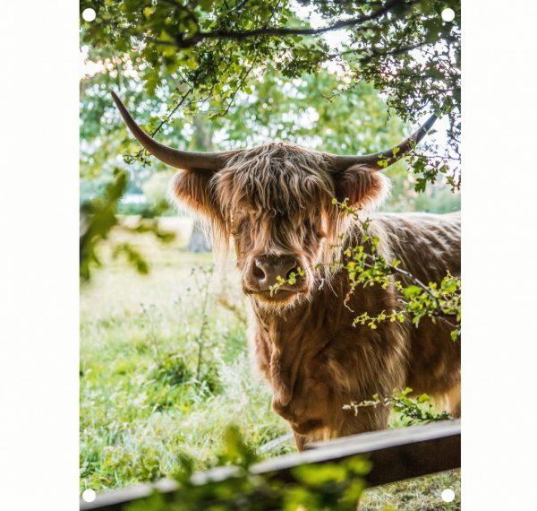 lr-highlander-summer-tuinposter.jpg