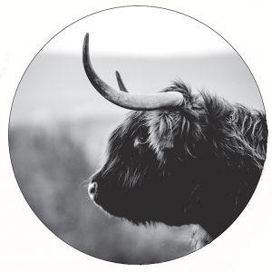 bull-30cm.jpg