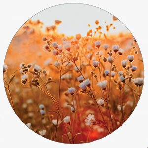 lovely-flower-40cm.jpg
